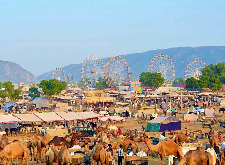 pushkar camel fair, Rajasthan in India