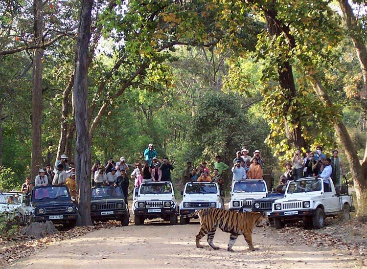 Bandhavgarh National Park in MP
